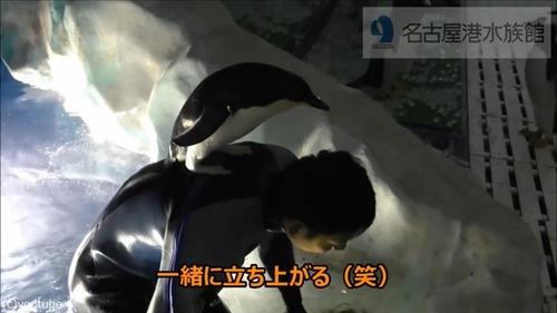 懐きすぎ!飼育員さんにベッタリのペンギン04