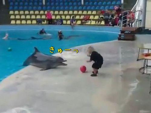 イルカと子供のボール遊び00