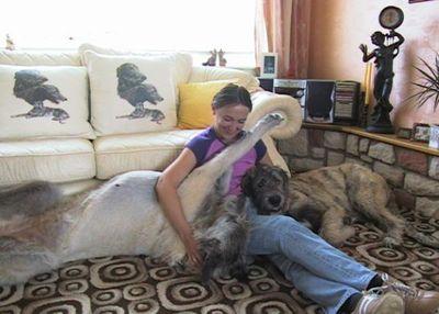 巨大な犬11