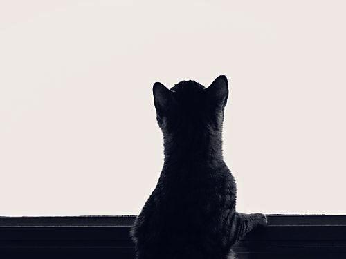 猫のための棚00