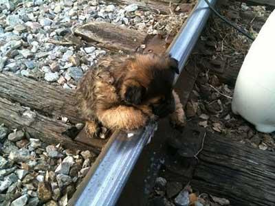 線路に凍りついてしまった子犬01