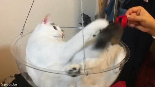 透明なボウルを猫のイスにすると02