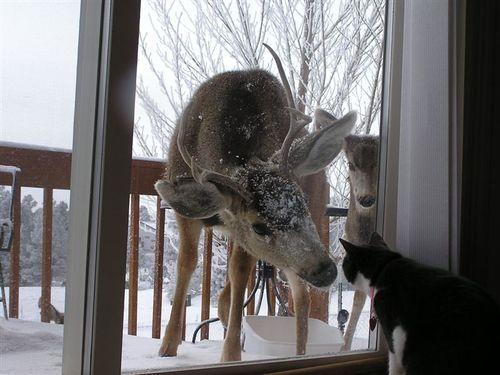 鹿と猫10