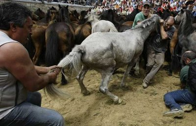 スペインの馬祭り07