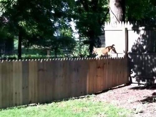 犬用のフェンスに誤算07