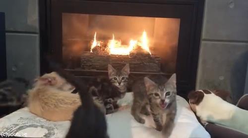 暖炉でくつろぐペットたちに03