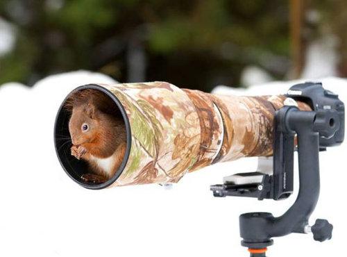 カメラマンな動物09
