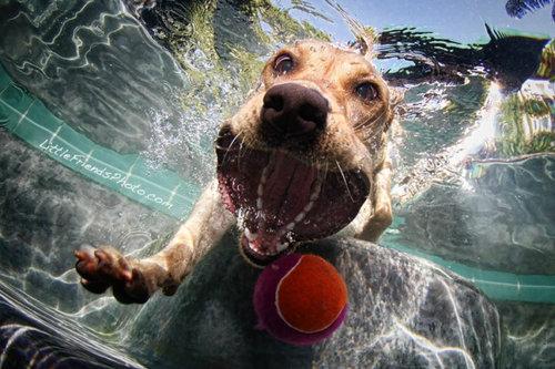水中の犬08