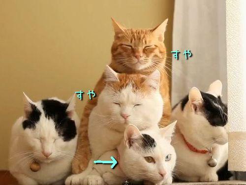猫3段00