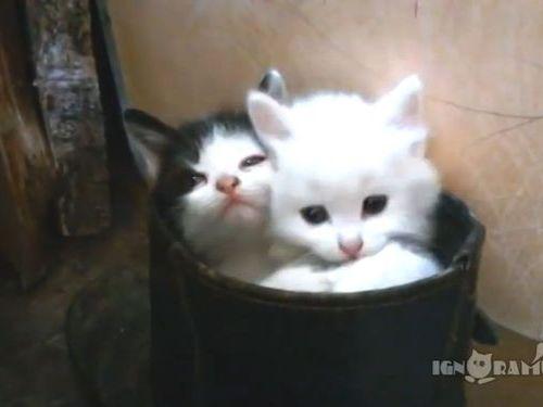 子猫2匹がブーツの中に入ると01