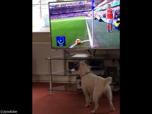 サッカーと犬00