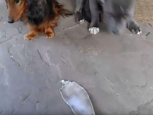 「悪い犬はどっち?」03