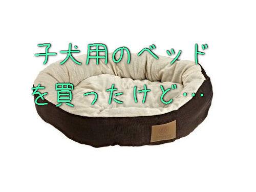 子犬用のベッド00