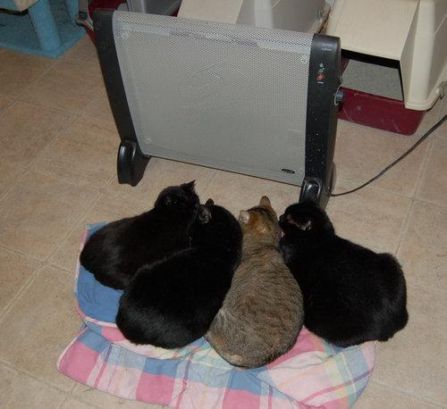 ぬくぬくする猫たち05
