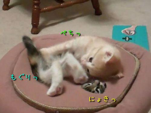 モグラたたき状態の子猫たち00