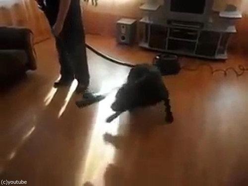 掃除機ラブな犬04