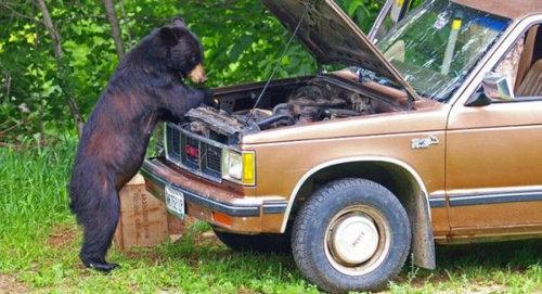 クマって人間っぽい11