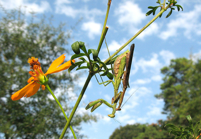 虫の交尾12