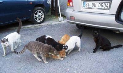 猫まみれ02