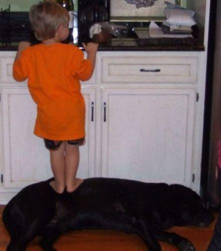 ペットと赤ちゃん07