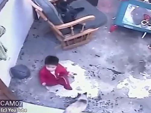 シャム猫が人間の赤ちゃんを必死に守る00