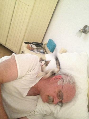 猫の住み着いたホテル09