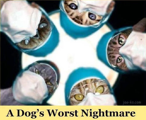 犬の悪夢01