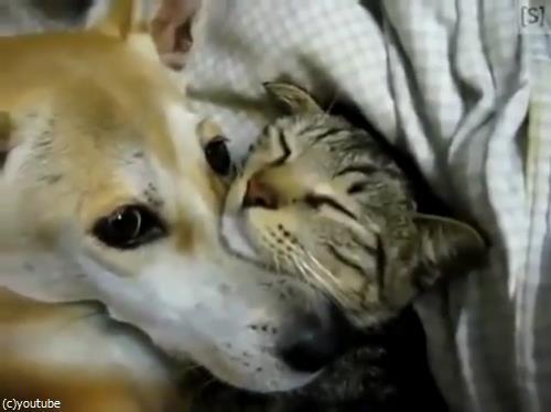 仲良く眠る犬猫02