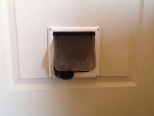 猫用のドアから犬の顔01