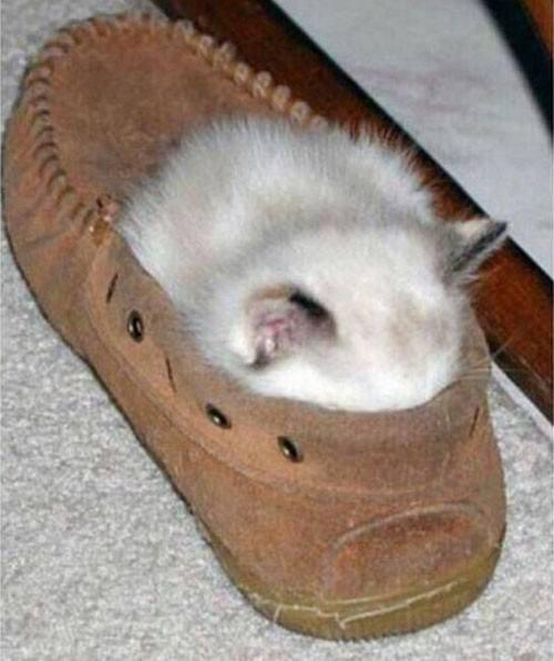 どこでも眠る猫11