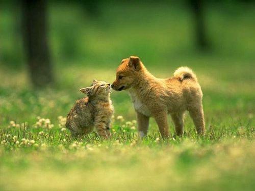 他の動物と仲良くする猫00