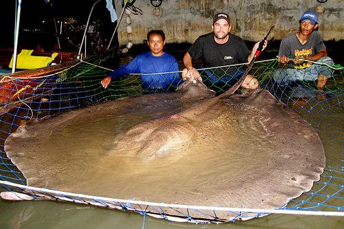 05大きい、巨体、ビッグな動物たち