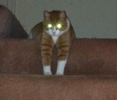 2階の猫02