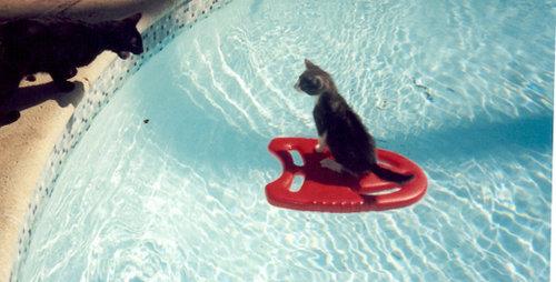 夏を満喫する猫10