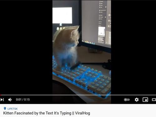 タイピングが気になる子猫