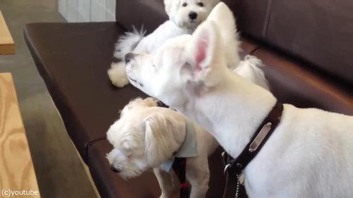 ケンカを始めた犬2匹と仲裁する1匹09