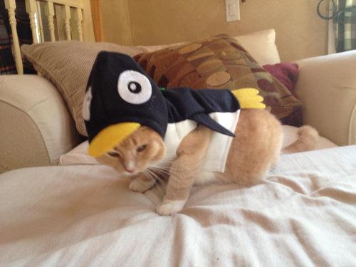 ペンギン猫09