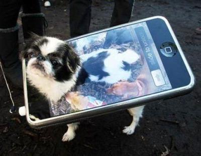 犬猫コスプレ10