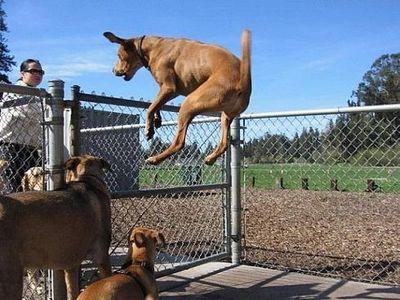 猫が飛ぶ、犬も飛ぶ、人も飛んで飛びまくりな画像05