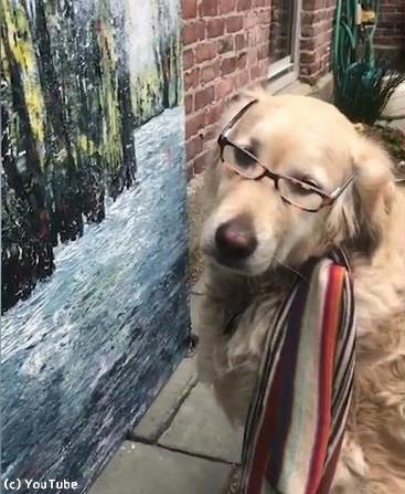 うちの犬は美術評論家04