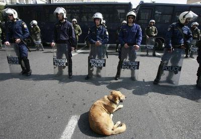 ギリシャの暴動犬06