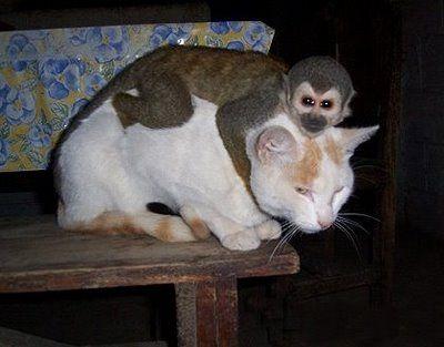 猿と猫の仲01
