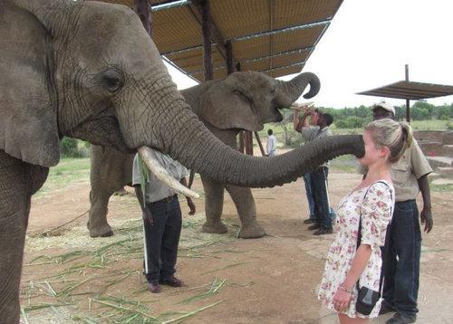 動物と女性たち14