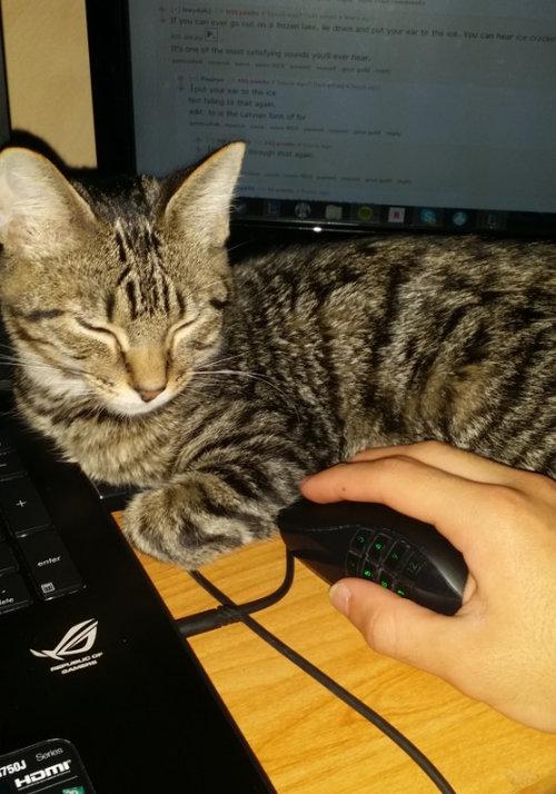 就職したら猫が変わった03