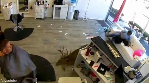 野生の鹿が窓から…美容室のビックリハプニング03