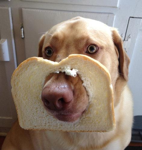 犬とパンの耳06