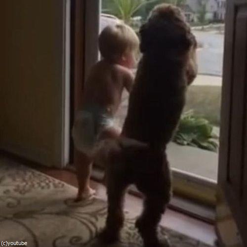 赤ちゃん&犬「パパが帰ってきた!」04