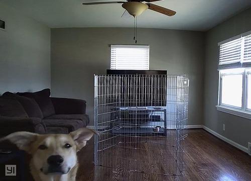 犬と監視カメラ01