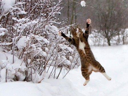 雪なんてへっちゃらな猫06