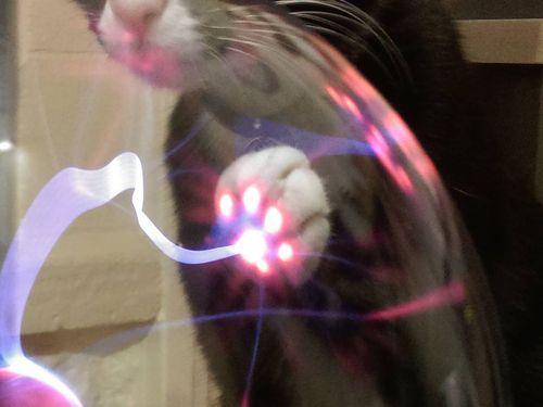 プラズマボールに猫が触れると02